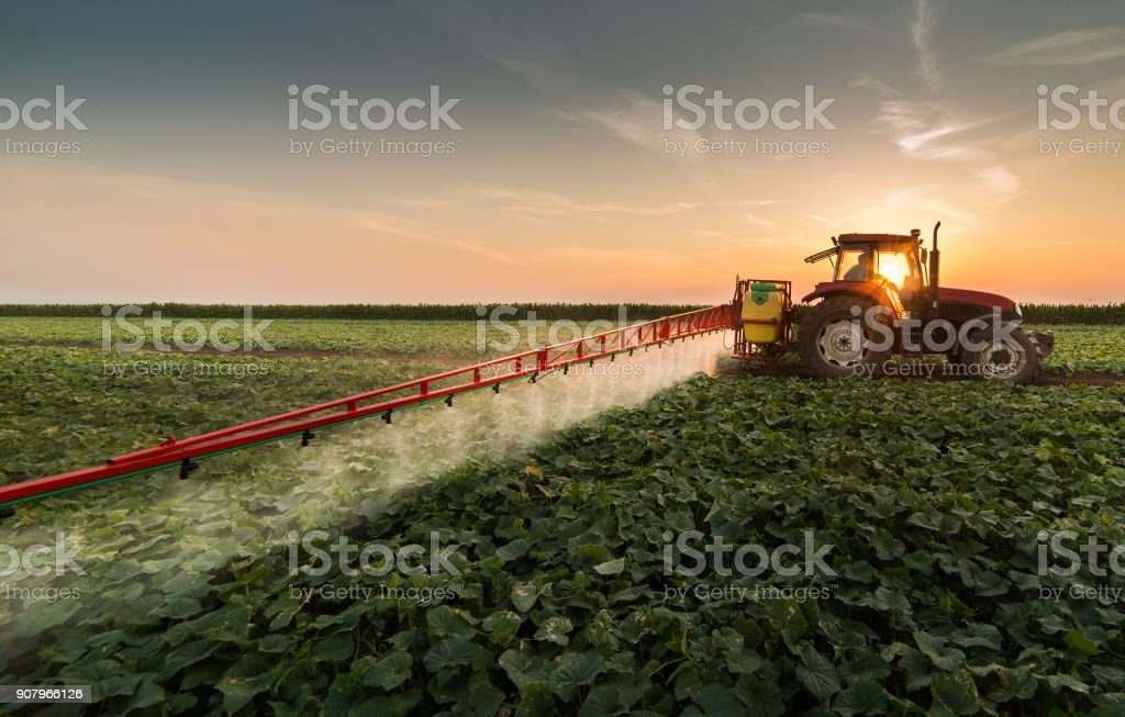 Tractor spraying pesticides on vegetable field with sprayer at spring stock photo