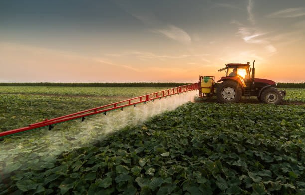 tractor spraying pesticides on vegetable field with sprayer at spring - field stock photos and pictures