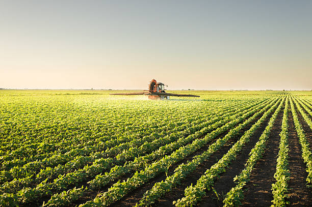 Tractor spraying pesticides Tractor spraying pesticides on soybean monoculture stock pictures, royalty-free photos & images