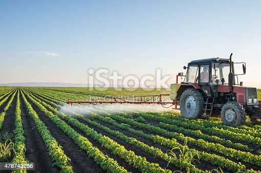 Tractor spraying soybean field at spring