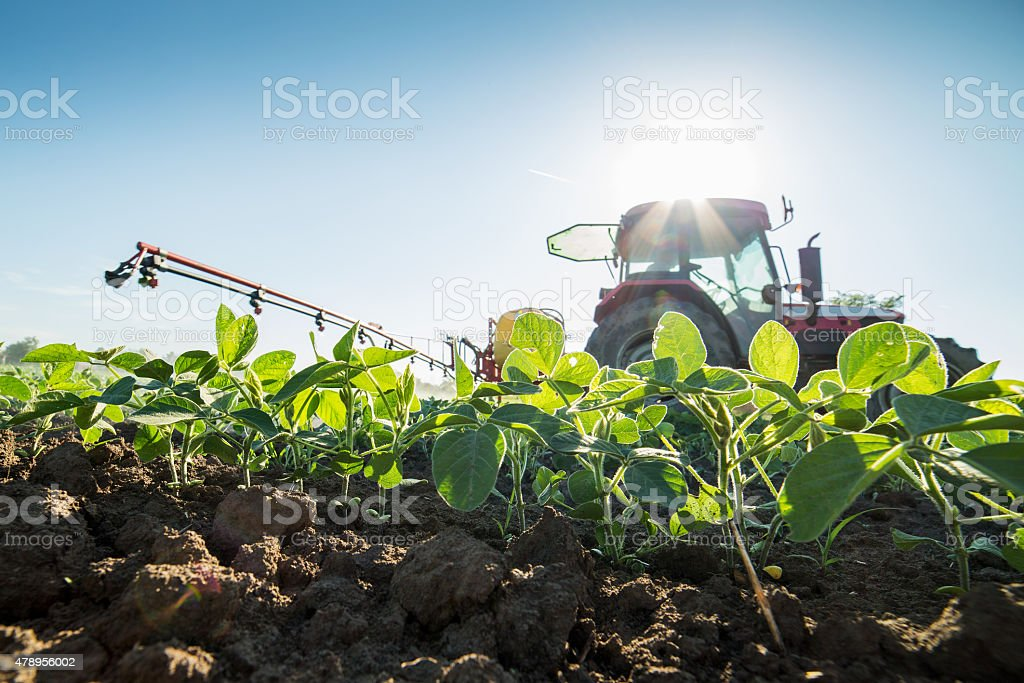 Tractor spraying soybean crops with pesticides and herbicides stock photo