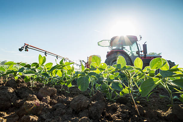 Tractor spraying soybean crops with pesticides and herbicides Tractor spraying soybean crops with pesticides and herbicides spraying stock pictures, royalty-free photos & images