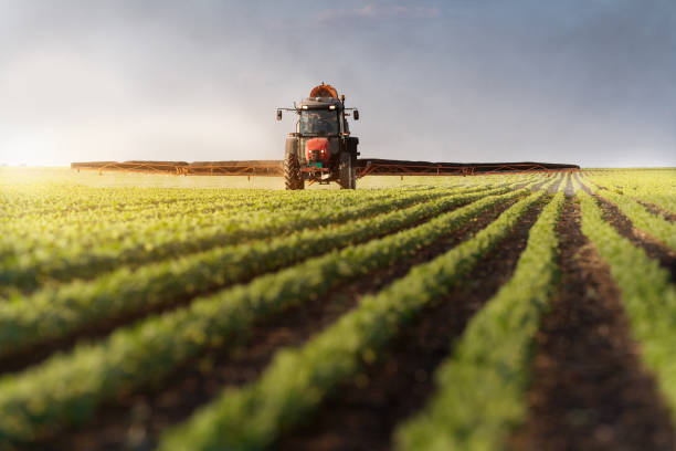 Tractor spraying soybean field at spring Tractor spraying soybean field at spring monoculture stock pictures, royalty-free photos & images
