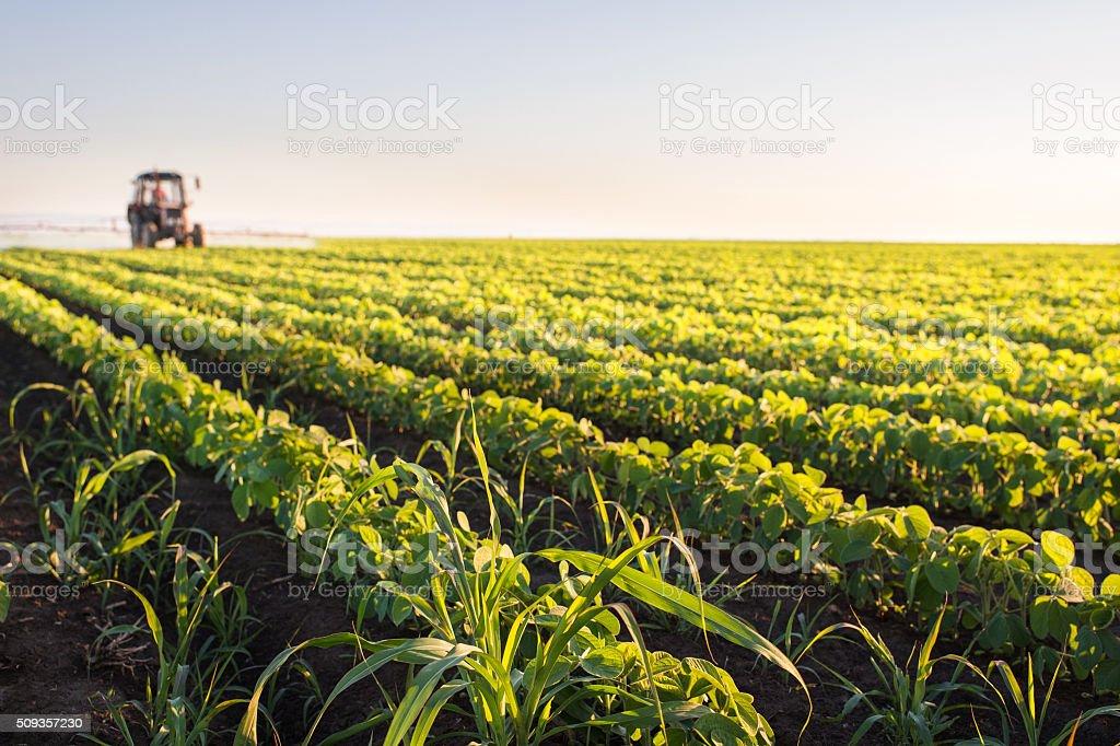 Trator jogando campo de soja - foto de acervo
