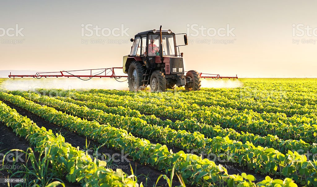 Tractor spraying soybean stock photo