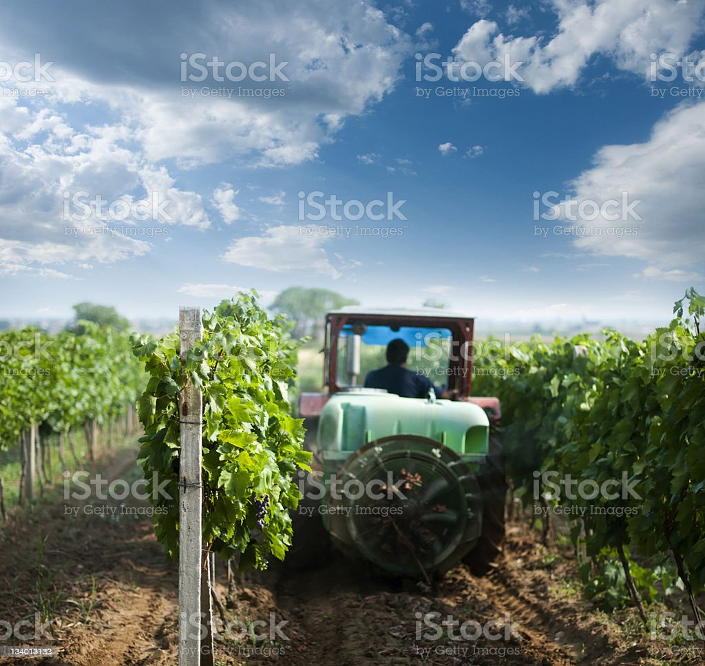 Tractor spraying vineyards with chemicals royalty-free stock photo