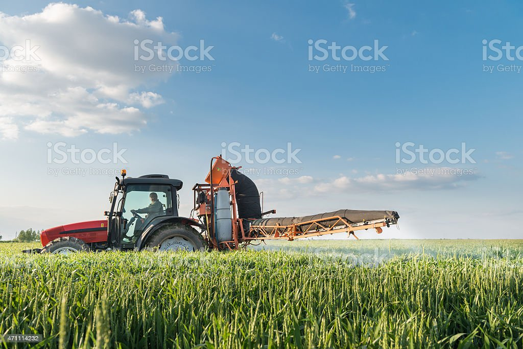 Tractor spraying wheat stock photo