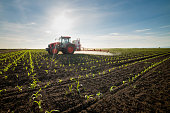 istock Tractor spraying young corn with pesticides 1224290959