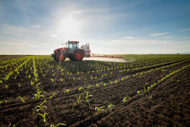 traktor besprüht jungen mais mit pestiziden - landwirtschaft stock-fotos und bilder