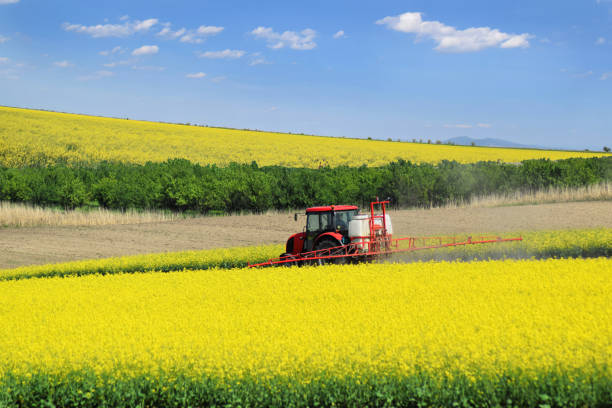 A tractor sprays the oil rape farmland in springtime A red tractor in the process of spraying the canola farm during spring canola stock pictures, royalty-free photos & images