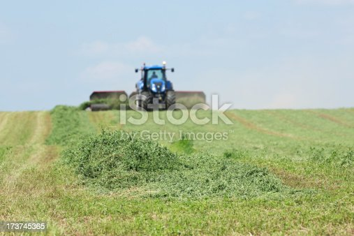 A tractor is towing a merger on a cut alfalfa (hay) field. The merger brings mowed rows together into  a windrow for harvesting or baling. Focus is on the foreground alfalfa, the tractor is soft.