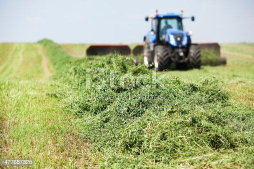 A tractor is towing a merger on a cut alfalfa (hay) field. The merger brings mowed rows together into a windrow for chopping or baling.