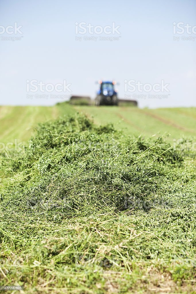 Tractor Towing Merger on Cut Alfalfa (Hay) Field stock photo