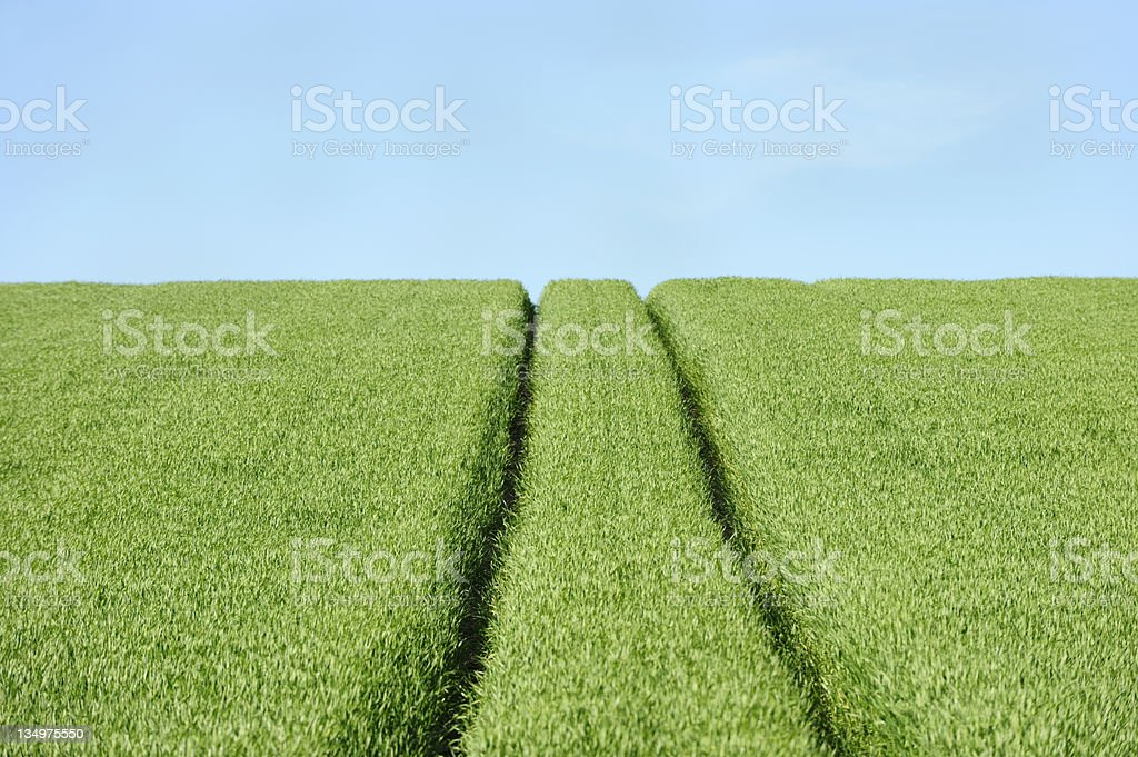 Tractor tracks in a field on a Scottish farm royalty-free stock photo