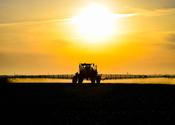 tractor with the help of a sprayer sprays liquid fertilizers on young wheat in the field. Tractor with the help of a sprayer sprays liquid fertilizers on young wheat in the field. The use of finely dispersed spray chemicals. Tractor on the sunset background. herbicide stock pictures, royalty-free photos & images