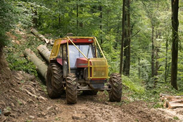 Ein Traktor mit Holz geht durch den Wald – Foto
