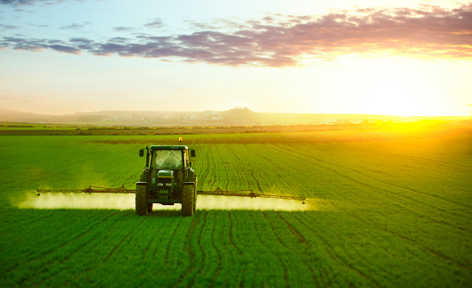 Tractor spraying a field of wheat
