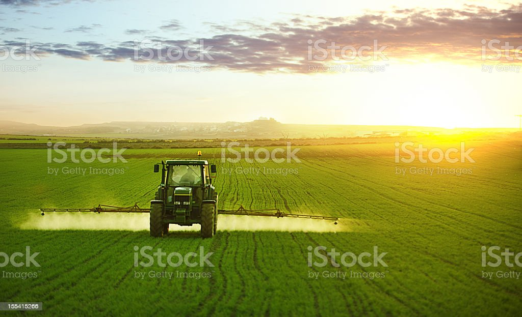 Tractor working in field of wheat stock photo