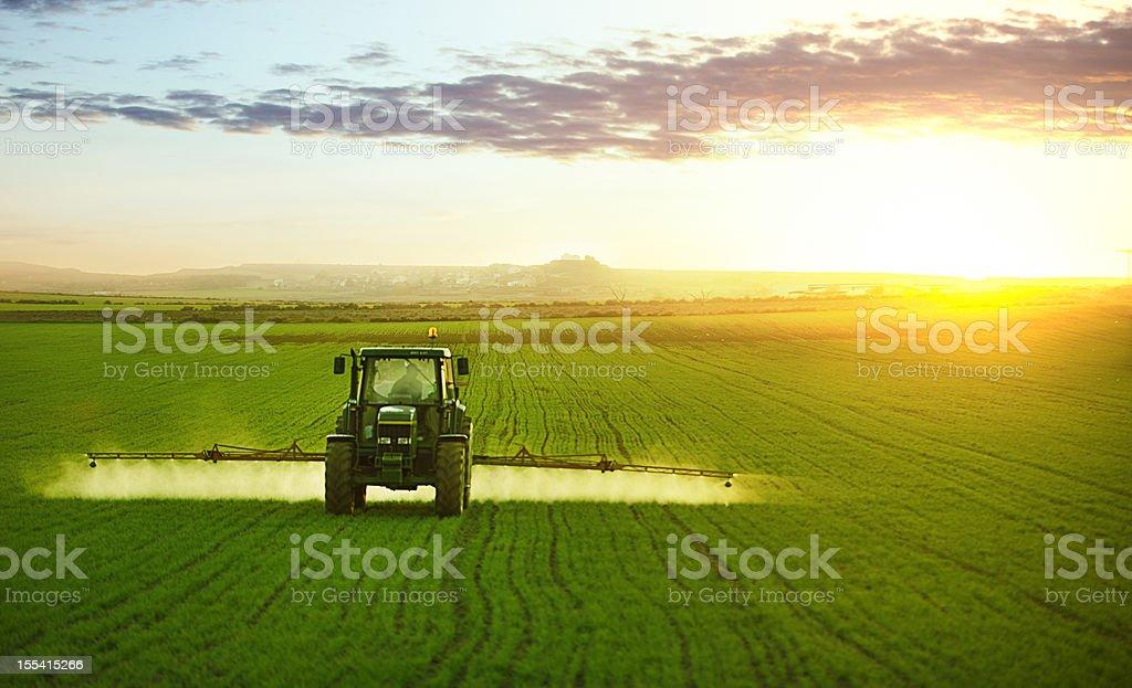 Tractor en el campo de trigo de trabajo - foto de stock