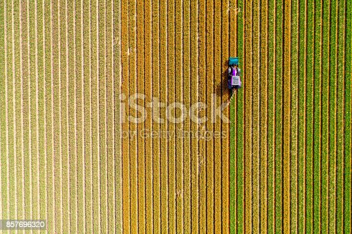 istock Tractor working on the tulip field 857696320