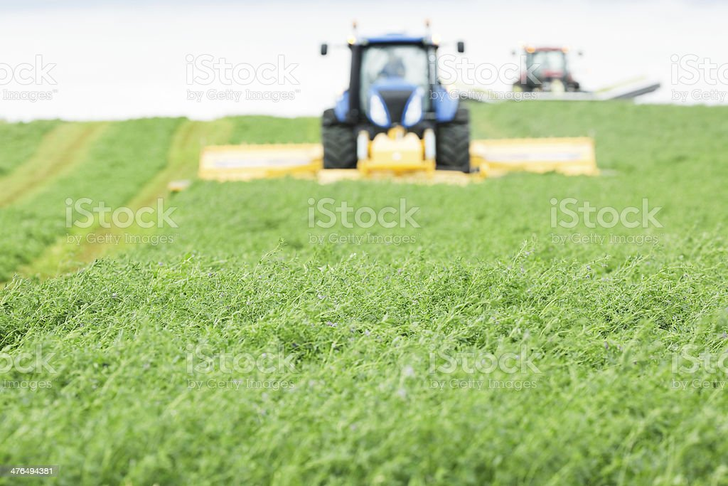 Tractors with Forage Harvesters on Alfalfa (Hay) Field stock photo