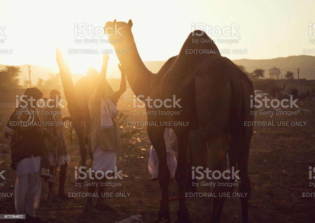 Trader with camels at Pushkar stock photo