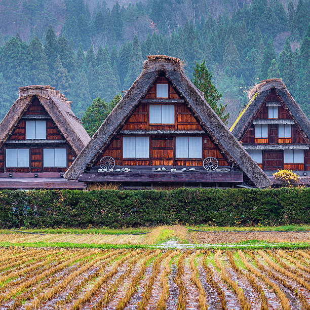 Traditional and Historical Japanese village Shirakawago in autum stock photo