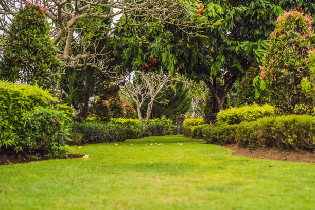 Traditional Balinese park, green garden. Bali, Indonesia Traditional Balinese park, green garden. Bali Indonesia backyard stock pictures, royalty-free photos & images