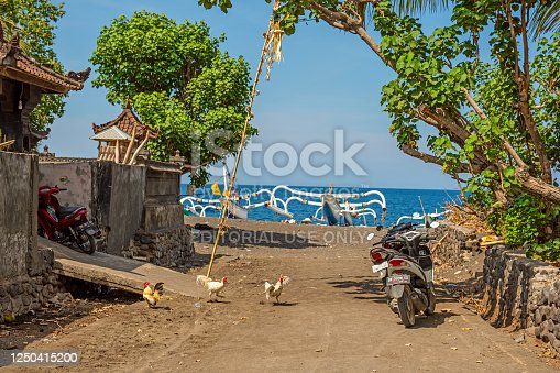 BALI, INDONESIA - December 01, 2019: chickens walking near traditional balinese house in Amed, Bali, Indonesia