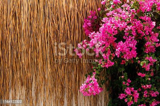 Traditional bougainvillea flower at bodrum mugla turkey