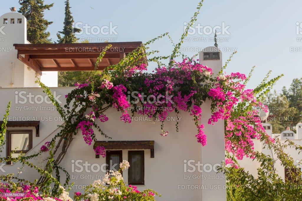 bodrum muğla türkiye'de geleneksel begonviller çiçeği - Royalty-free Asya Stok görsel