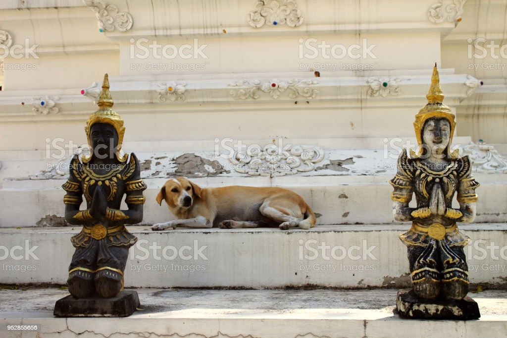 The picture is taken at Wat Dokkham Chiang Mai