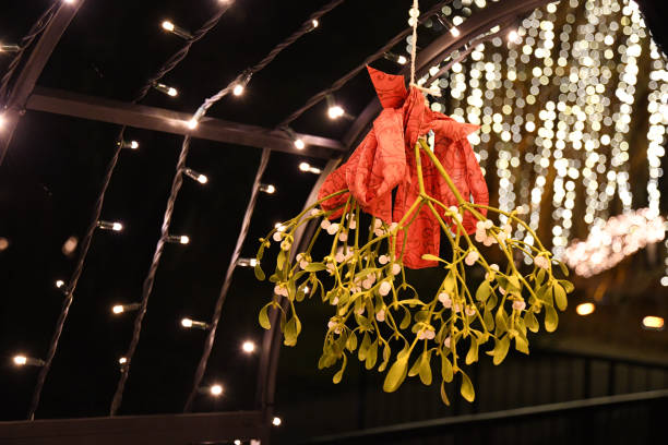 Traditional Christmas mistletoe bush with red ribbons and blurry shiny lights on dark night background. Closeup of green mistletoe branch and bokeh backdrop. Place for kisses at Christmas eve stock photo