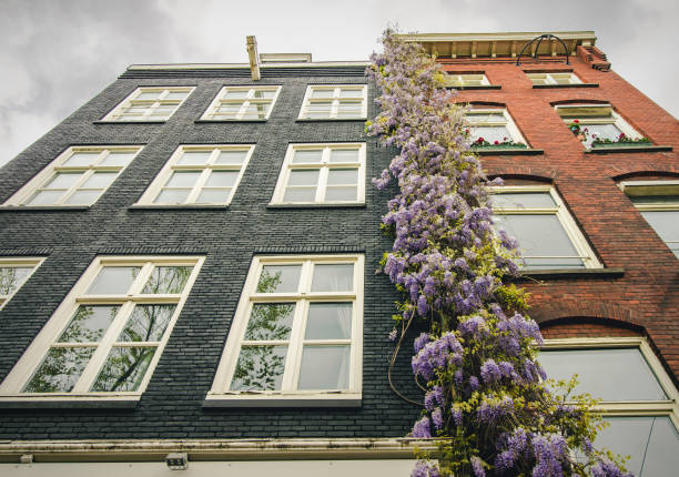 Traditional, colorful Dutch housing in the center of Amsterdam, the Netherlands stock photo