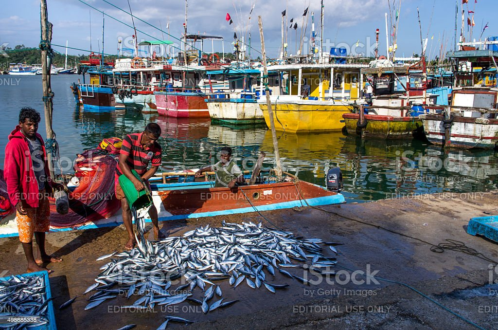Traditional colorful fishing boats in Mirissa harbour stock photo
