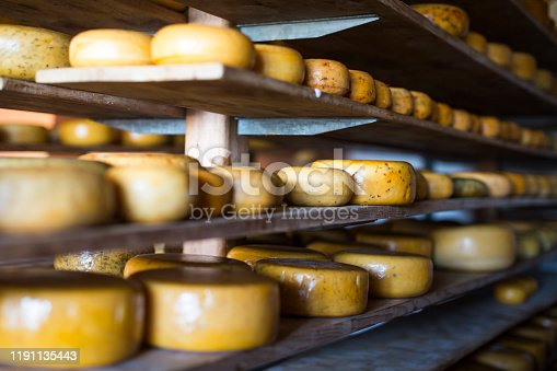 Ordered pattern of Dutch Gouda cheeses ripening on wooden shelves in a traditional cheese farm