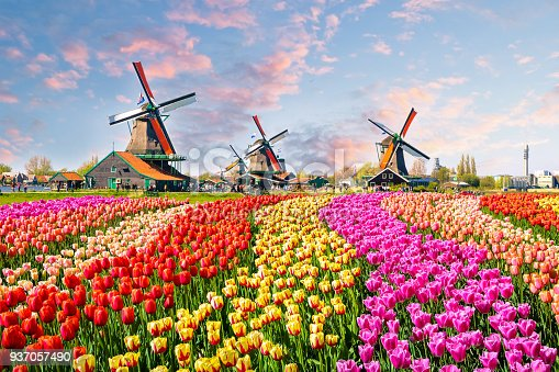 istock Traditional dutch windmills and houses near the canal in Zaanstad village, Zaanse Schans, Netherlands, Europe 937057490