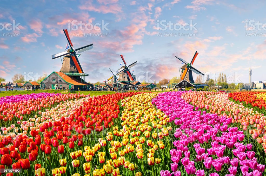 Traditional dutch windmills and houses near the canal in Zaanstad village, Zaanse Schans, Netherlands, Europe stock photo