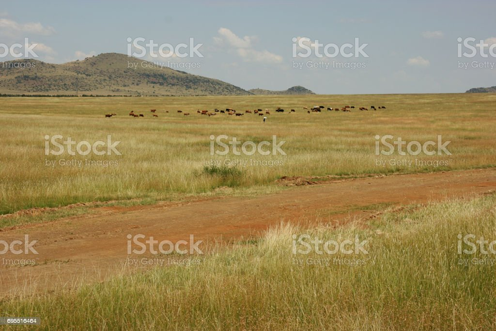 Traditional farming between Bloemfontein and Ladybrand, Free State, South Africa stock photo