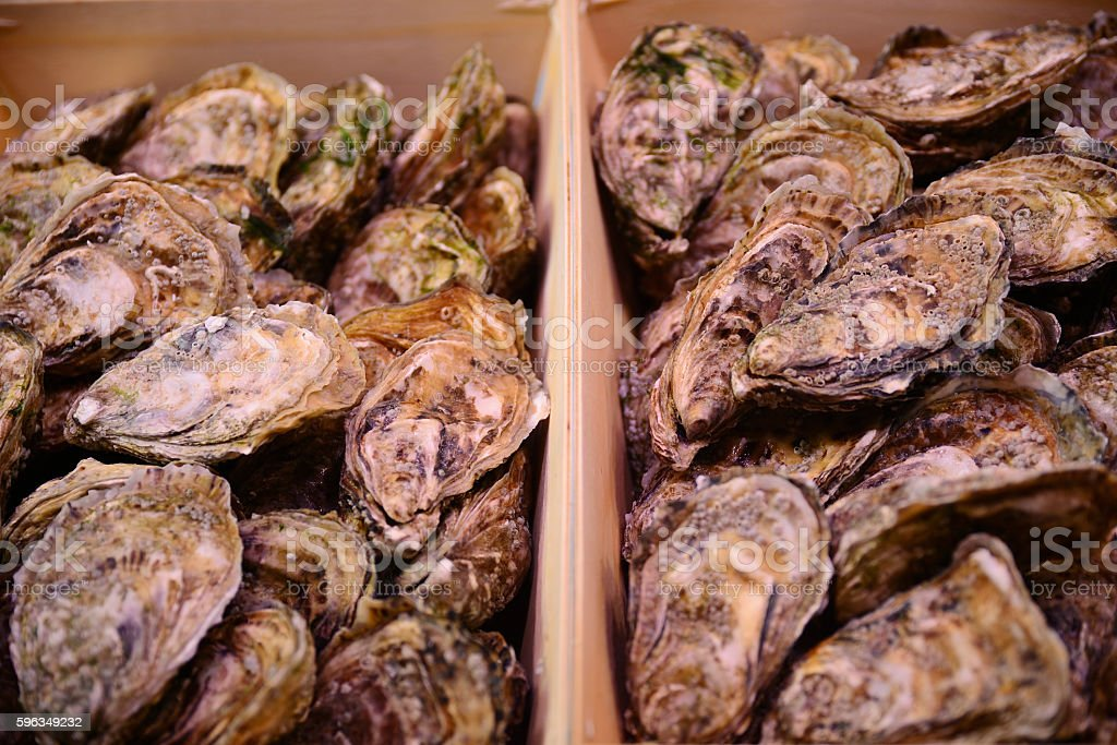 Traditional fish market stall full of fresh shell oysters royalty-free stock photo