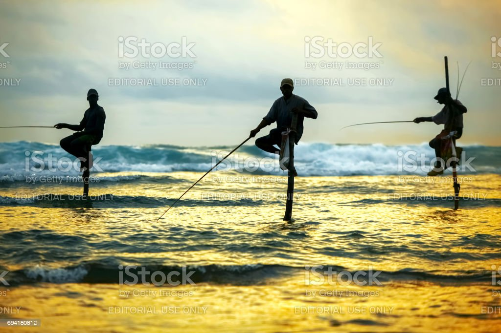 Traditional fishermen on sticks are fishing at the sunset in Sri Lanka. stock photo