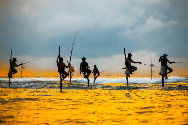 Traditional fishermen on sticks are fishing at the sunset in Sri Lanka. stock photo