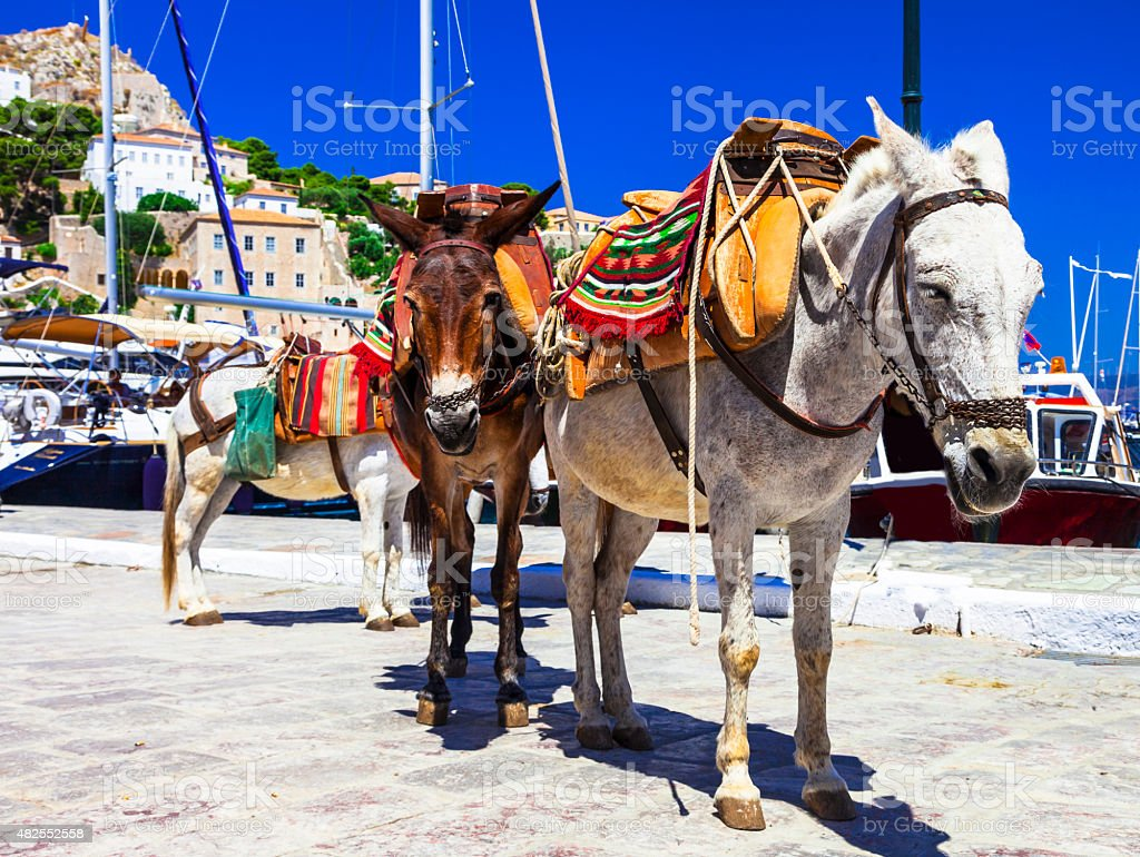 Traditional Greece ,Donkeys in Hydra Island. stock photo