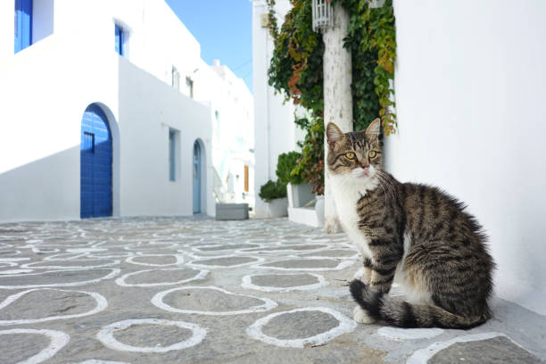traditionellen griechischen inseldorf mit tabby katze, plaka village, griechenland - ägäische inseln stock-fotos und bilder