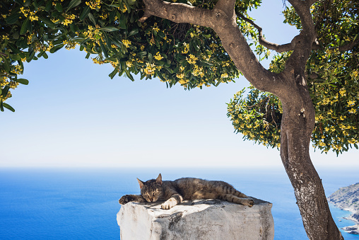 Traditional greek village and lazy relaxed cat, Greece