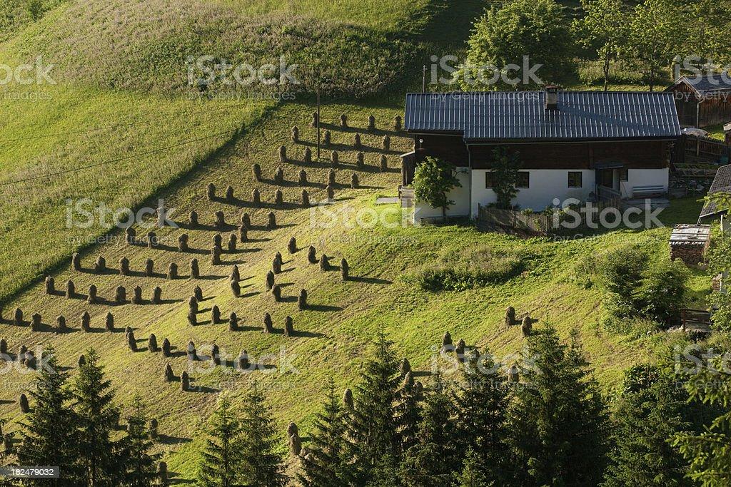 traditional hey harvesting in tirol royalty-free stock photo