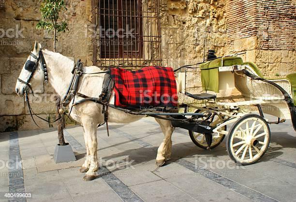Traditional horse and cart at cordoba picture id480499603?b=1&k=6&m=480499603&s=612x612&h=awxskjona0n2uxk6bktazudkklebfye97zfcpad8nng=