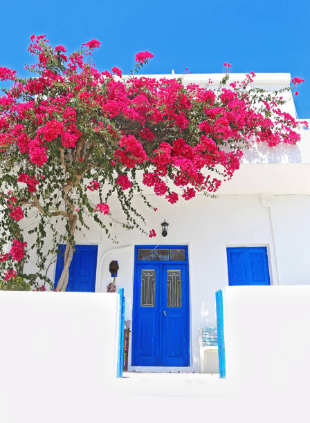 traditional houses with blooming bougainvilleas at Ano Koufonisi island Cyclades Greece stock photo
