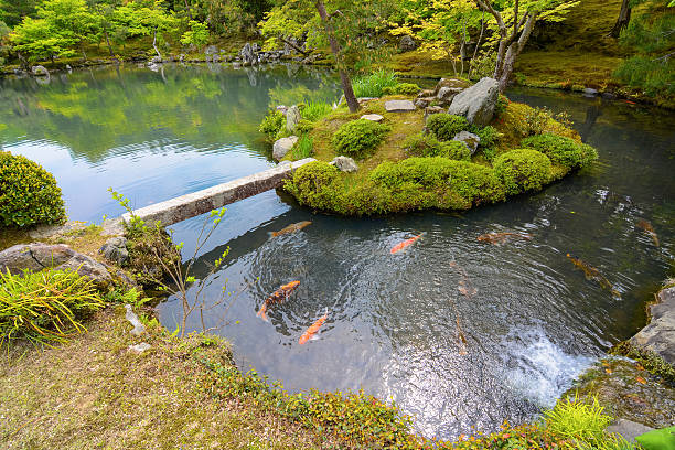 Royalty free japanese koi fish pictures images and stock for Mini pond con pesci