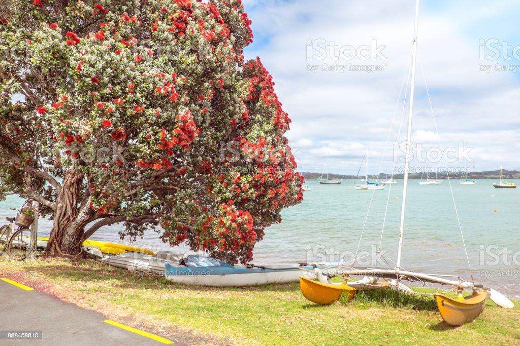 Traditional kiwi summer beach with flowering red Pohutukaka tree, sea and boats - in Russell, Bay of Islands, Northland, New Zealand, NZ stock photo